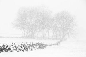 Winter Wildness by Doug Chinnery