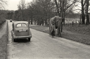 Exercising Elephant by Anonymous