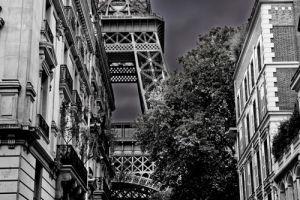 A Glimpse of La Dame by Julian Elliott