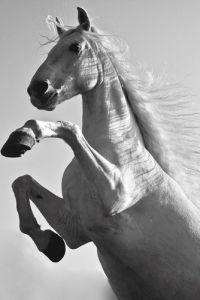 Natural Horse I by Luru Wei
