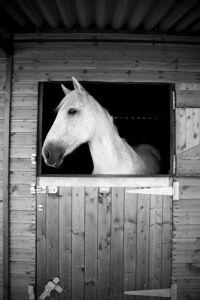Natural Horse II by Luru Wei