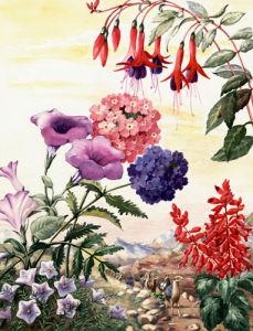 South American Flowers by Else Bostelmann