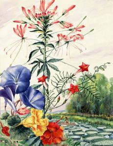 South American Jungle Flowers by Else Bostelmann