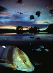 Amazon Fish by LOOK