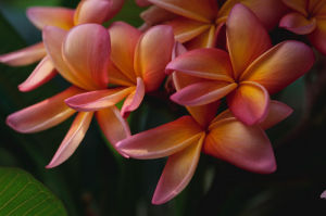 Rainforest Flower by LOOK