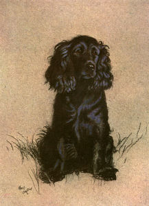 Cocker Spaniel, 1928 by Cecil Aldin