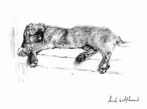Irish Wolfhound, 1939 by Cecil Aldin