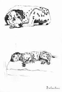 Dalmatian puppy, 1939 by Cecil Aldin