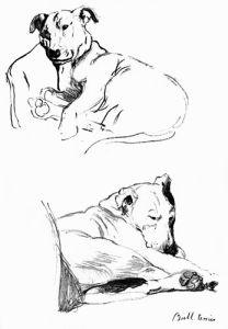 Bull Terrier, 1939 by Cecil Aldin