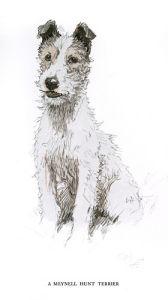 Fox Terrier, 1930 by Cecil Aldin