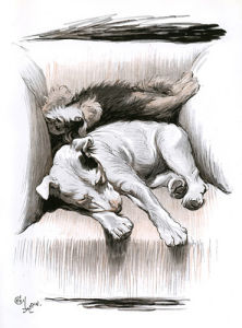 Bull Terrier and Dachshund puppy, 1930 by Cecil Aldin