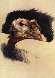Mickie, 1932 by Cecil Aldin