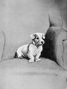 Small Terrier, 1932 by Cecil Aldin
