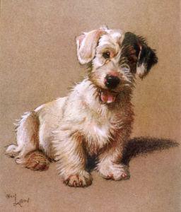 Sealyham Terrier, 1928 by Cecil Aldin