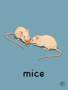 mice by Ladybird Books'