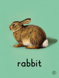 rabbit by Ladybird Books'