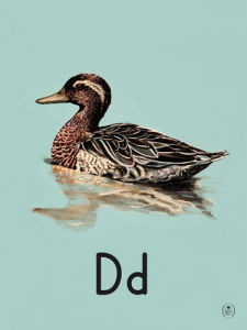 D is for duck by Ladybird Books'