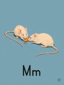 M is for mice by Ladybird Books'