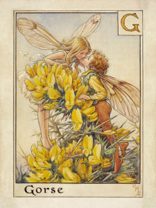 Gorse Fairies by Cicely Mary Barker