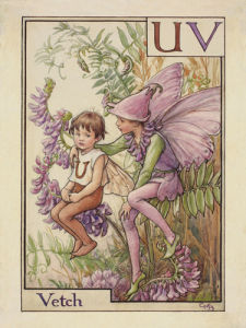 Vetch Fairy by Cicely Mary Barker