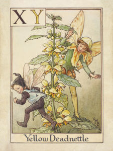 Yellow Deadnettle Fairy by Cicely Mary Barker