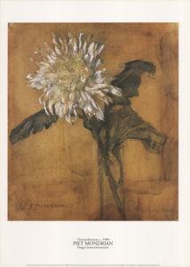 Chrysanthemum, c.1900 by Piet Mondrian