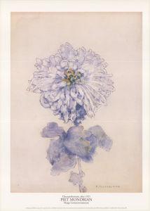 Chrysanthemum, after 1921 by Piet Mondrian