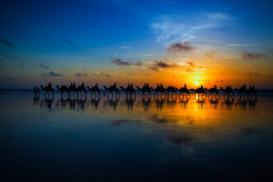 Sunset Camel Ride by Louise Wolbers
