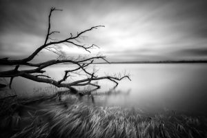 Serenity by Louis-Philippe Provost