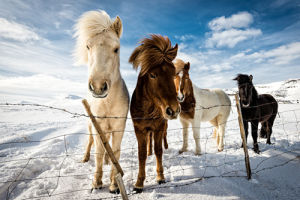 Icelandic Hair Style by Mike Leske