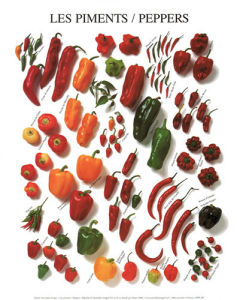 Peppers by Atelier