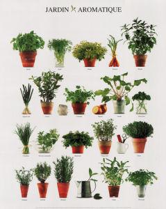 Aromatic Garden by Atelier