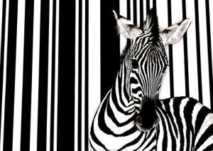 Zebra I by Flach