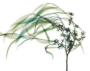 Wind (small) by Steven N. Meyers