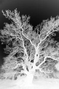 Ghostly Tree by Richard Osbourne