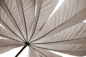 Palm Leaf - Sepia by Richard Osbourne