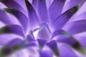 Ultraviolet Lily Buds by Richard Osbourne