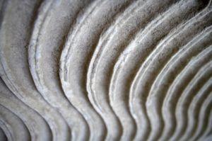 Roman Marble (Detail) by Richard Osbourne