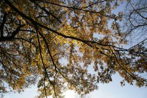 Bright Leaves II by Richard Osbourne
