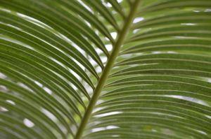 Palm Leaf I by Richard Osbourne