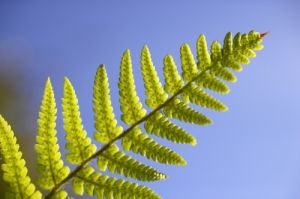 Fern Leaf II by Richard Osbourne
