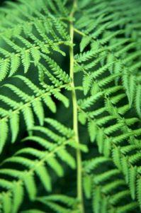 Fern Leaf III by Richard Osbourne