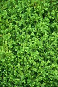 Moss Carpet by Richard Osbourne