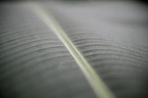 Palm Leaf III by Richard Osbourne