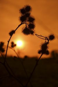Sunset Nature Silhouette by Richard Osbourne