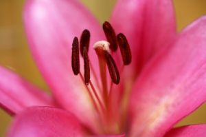 Lily III by Richard Osbourne