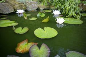 Pond With Waterlilies I by Richard Osbourne
