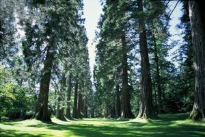 Sequoia Avenue, Argyl by Richard Osbourne