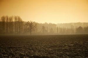 Winter Fields I by Richard Osbourne