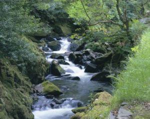 Mountain Stream - Snowdonia by Richard Osbourne
